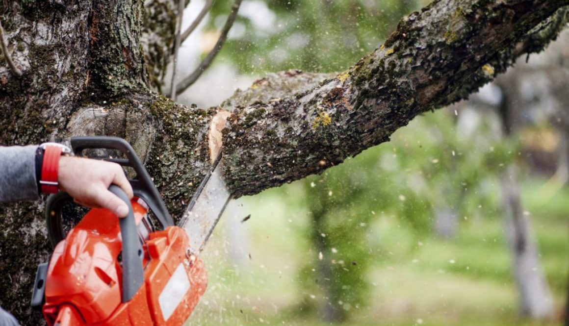 tree_branch_cutting